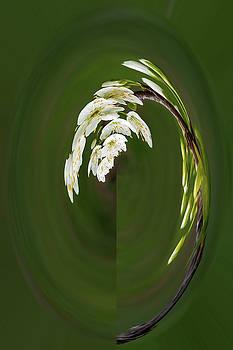 Rick Strobaugh - Spring Blossoms