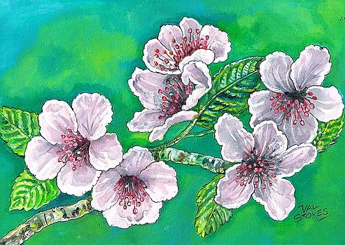 Spring blossoms by Val Stokes