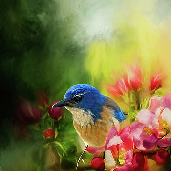 Spring Blue Jay by Diane Schuster