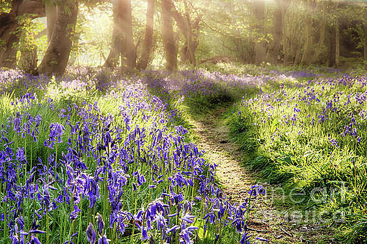 Spring bluebell path through a magical forest by Simon Bratt Photography LRPS