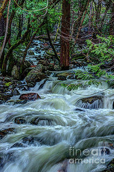 Spring Bridalveil Creek in Yosemite by Terry Garvin