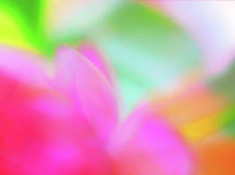 Spring Brights by Menega Sabidussi
