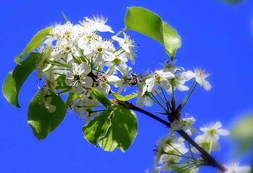 Spring brings bees by Billie Earley