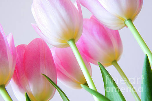 Spring candy by Julia Hiebaum