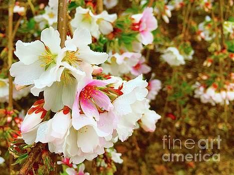 Spring cherryblossoms  by Wonju Hulse