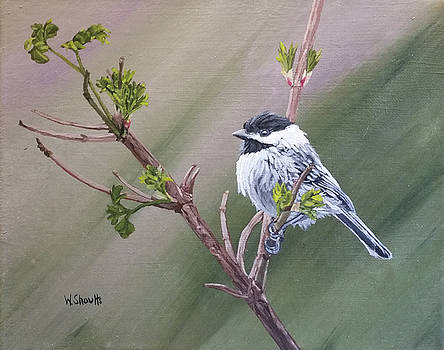 Spring Chickadee by Wendy Shoults