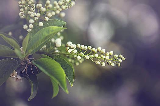 Spring by Cindy Grundsten