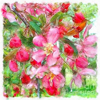 Spring Crab Apple Blossoms 2 by Helene Guertin