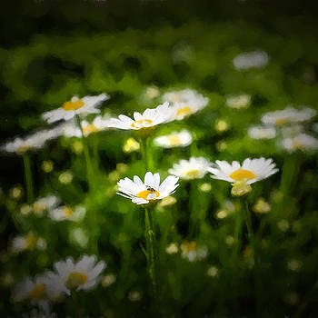 Chris Bordeleau - Spring Daisies - Square