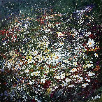 Spring Daisy Flowers in Field  by Zlatko Music