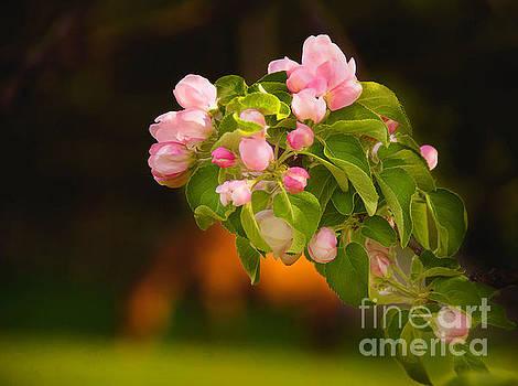 Spring Dawning by Sandra Silva