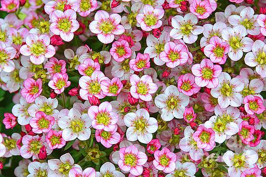 Regina Geoghan - Spring Delight