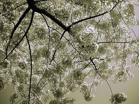 Spring Display by Julia Raddatz