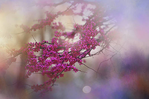 Spring Dream I by Toni Hopper