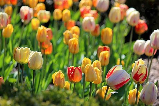 Rosanne Jordan - Spring Emerges