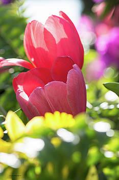 Spring Feeling by Edward Congdon