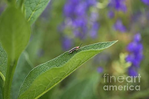Spring Firefly by Rachel Morrison