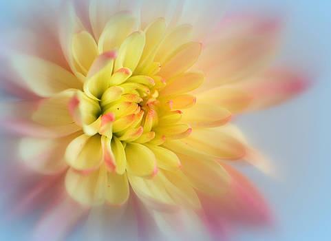 Nina Bradica - Spring Flower-1