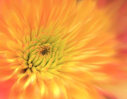 Nina Bradica - Spring Flower-2