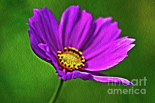 Spring Flower by Janice Spivey