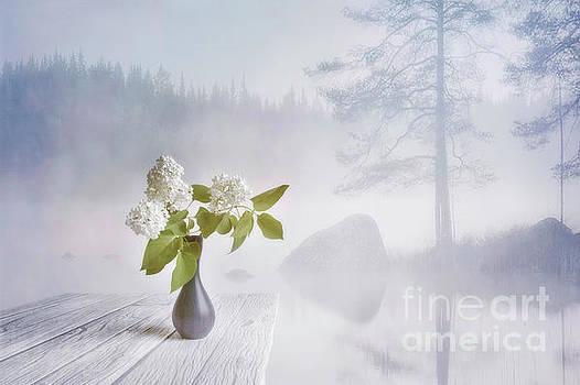 Spring flowers 2 by Veikko Suikkanen