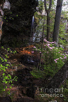 Barbara Bowen - Spring flowers at Keon Falls