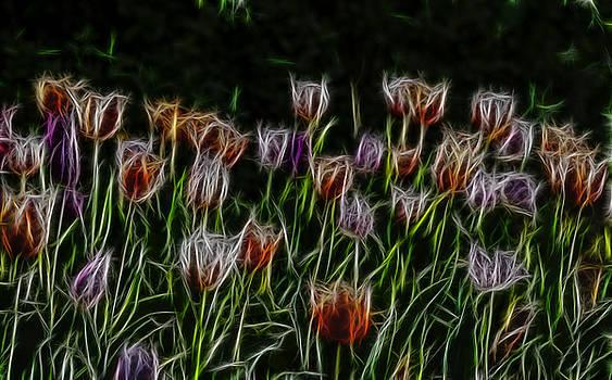 Spring flowers background by Julian Popov