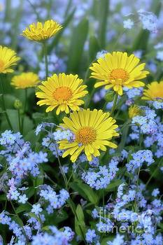 Spring Flowers Forget Me Nots and Leopard's Bane by Henry Kowalski