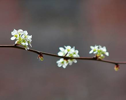 Karin Kohlmeier - Spring Flowers II