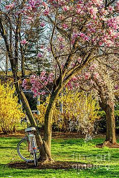 Spring Flowers in Washington DC by Thomas R Fletcher