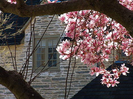 Spring Flowers by Joyce Kimble Smith