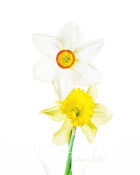 Spring Flowers by Nena Pratt