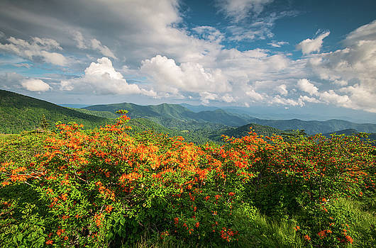 Spring Flowers North Carolina Flame Azalea Appalachian Trail Roan Mountain by Dave Allen