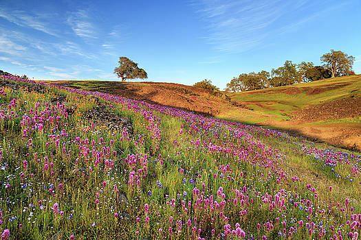 Spring Flowers On North Table Mountain by James Eddy