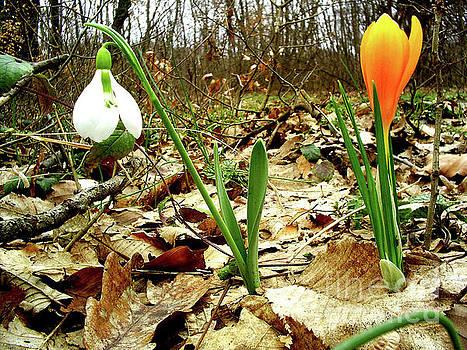 Spring flowers by Ventsislav Iliev