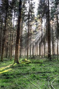 Jacek Wojnarowski - Spring forest HDR B