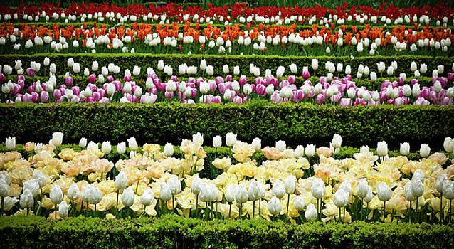 Frank Tschakert - Spring Garden - Colorful Tulips