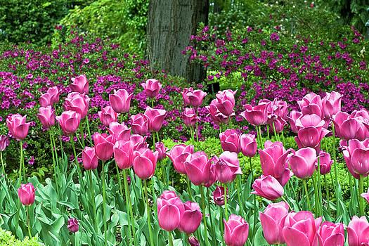 Frank Tschakert - Spring Garden - Pink Tulip Border