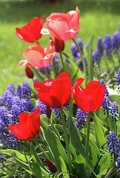 Spring Garden by Trina Ansel