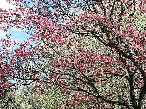 Spring Glorious Spring by Angela Davies