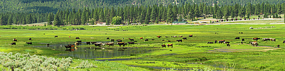 Spring Grazing by L J Oakes