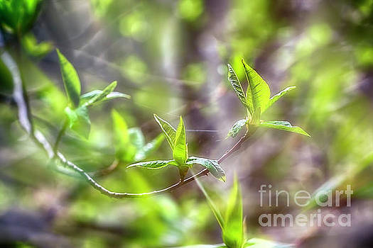 Spring Green 4 by Veikko Suikkanen