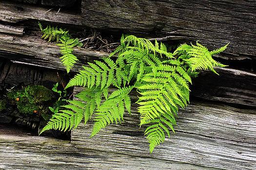 Spring Green by Bill Morgenstern