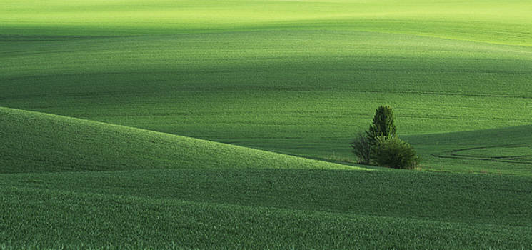 Spring green field and tree. Ukraine, Volhynia by Sergey Ryzhkov