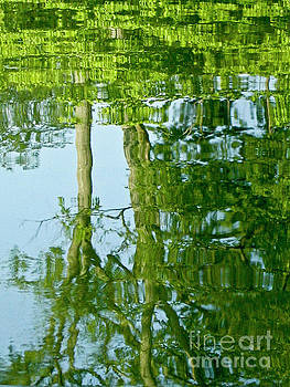 Spring Greenery Reflections by Carol F Austin