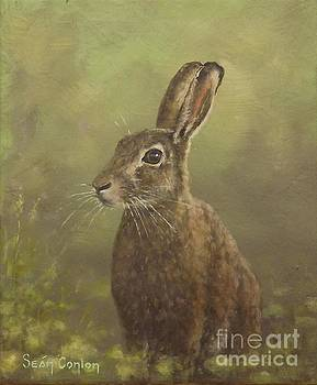 Spring Hare by Sean Conlon