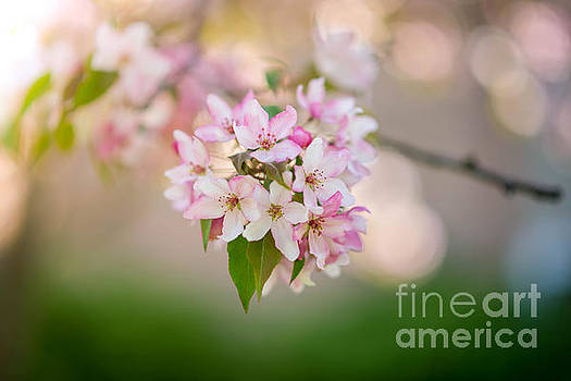 Spring Has Sprung by Briella Danowski