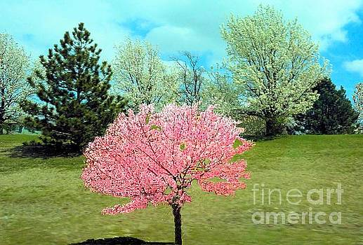 Spring Has Sprung and Winter's Done by Janette Boyd