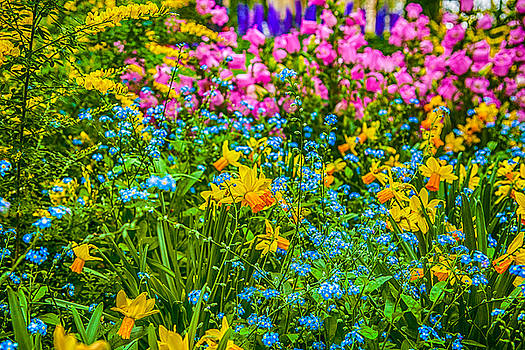 Spring has sprung by Jodi Jacobson