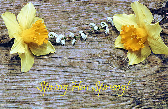 Spring Has Sprung by Sheila Brown